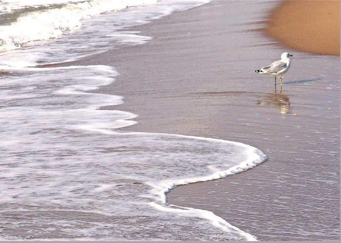 Sea Gull Walking On The Beach On A Hot Summer Day Greeting Card featuring the photograph Sea Gull Reflection by Cindy Lee Longhini