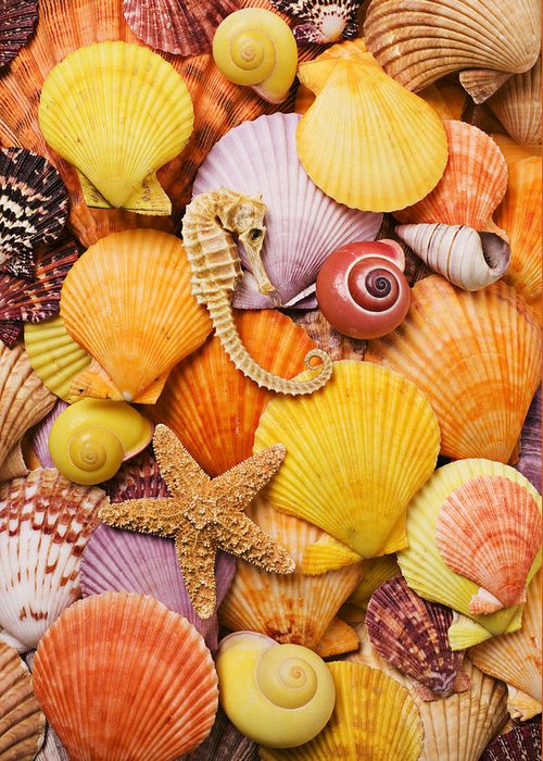 Sea Shells Starfish Greeting Card featuring the photograph Sea Horse Starfish And Seashells by Garry Gay