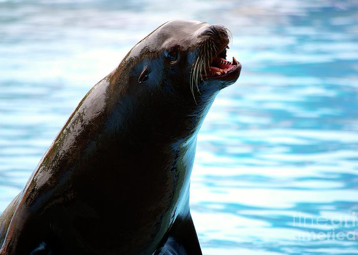 Animal Greeting Card featuring the photograph Sea-lion by Carlos Caetano