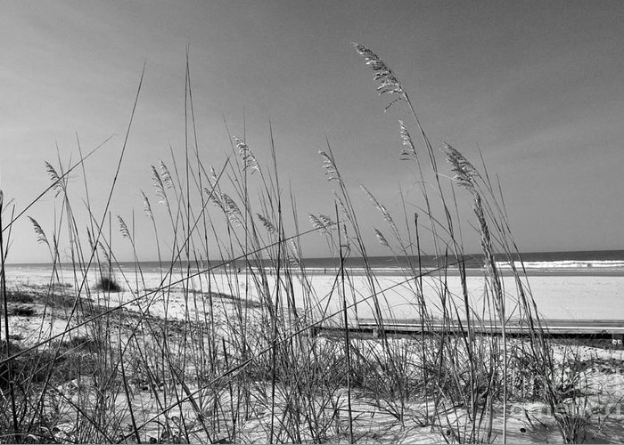Sea Oats Greeting Card featuring the photograph Sea Oats by John Black