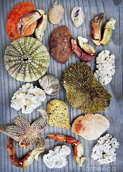 Shells Greeting Card featuring the photograph Sea Treasures by Elena Elisseeva