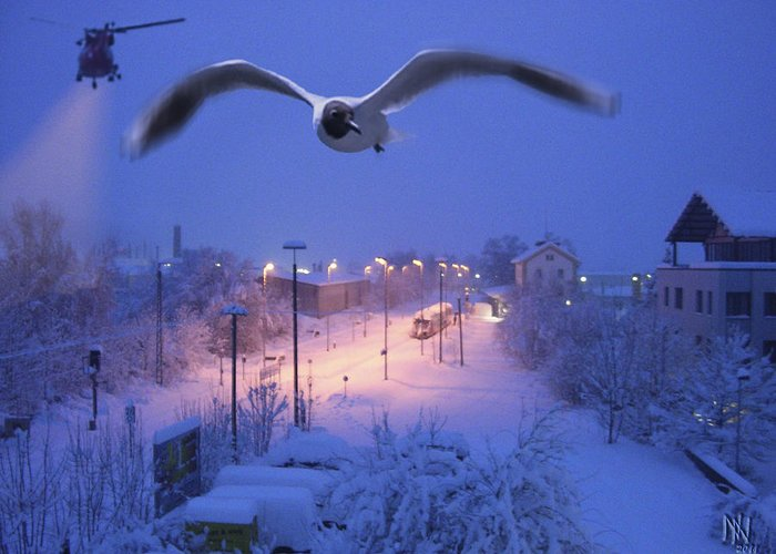 Seagull Greeting Card featuring the digital art Seagull At Winter by Nafets Nuarb