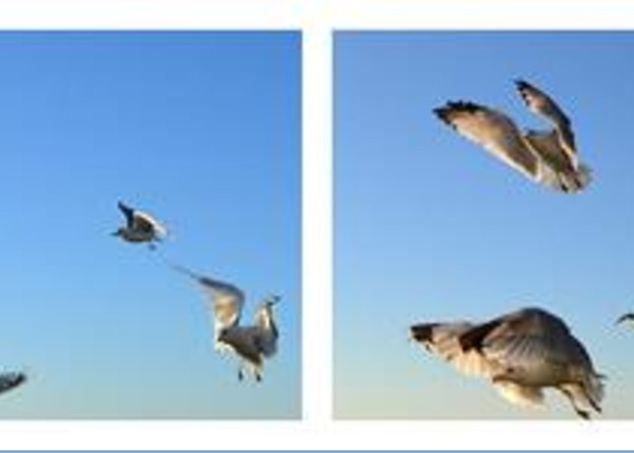Seagull Greeting Card featuring the photograph Seagull Collage by Michelle Calkins