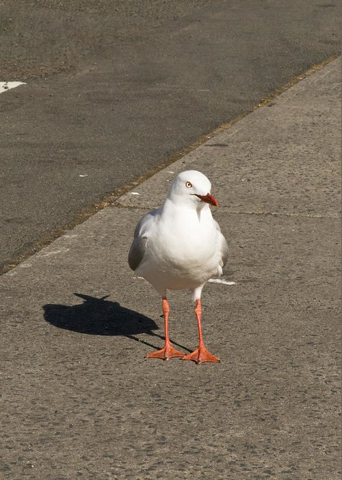 Animals Greeting Card featuring the photograph Seagull In The Summer Sun by Ulrich Schade