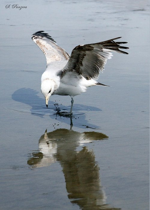 Seagull Greeting Card featuring the photograph Seagull Reflection by Samantha Panzera