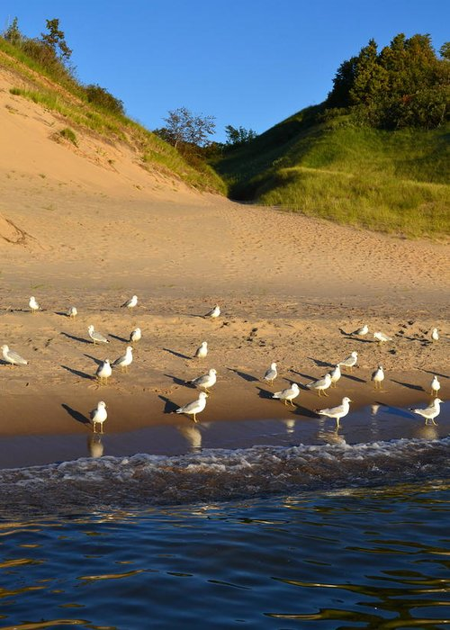Lake Michigan Greeting Card featuring the photograph Seagulls At The Bowl by Michelle Calkins