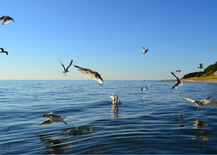 Lake Michigan Greeting Card featuring the photograph Seagulls Over Lake Michigan by Michelle Calkins