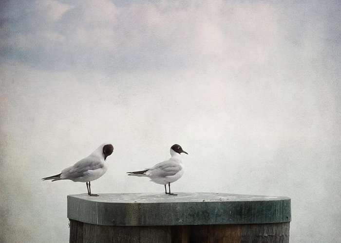 Birds Greeting Card featuring the photograph Seagulls by Priska Wettstein