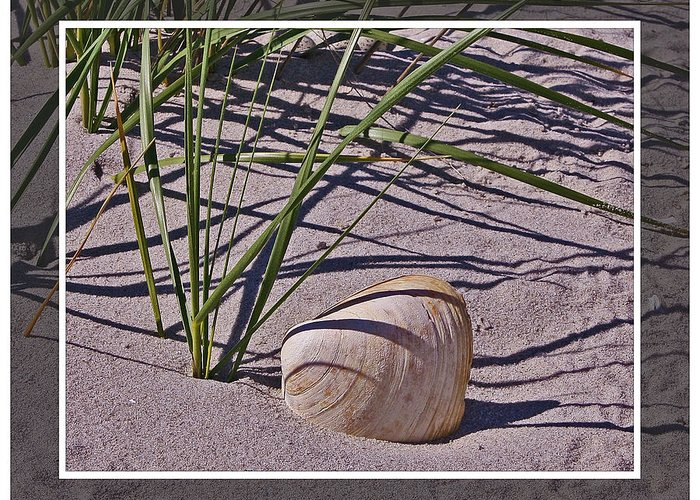 Beach Greeting Card featuring the photograph Seashore Scene by Mikki Cucuzzo