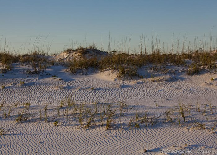 Sand Dunes Greeting Card featuring the photograph Seaside Dunes 4 by Charles Warren