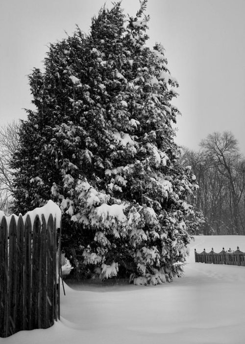Snow Greeting Card featuring the photograph Season Of White by Steven Ainsworth