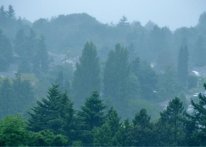 Morning Greeting Card featuring the photograph Seattle Morning Fog by Ami Tirana