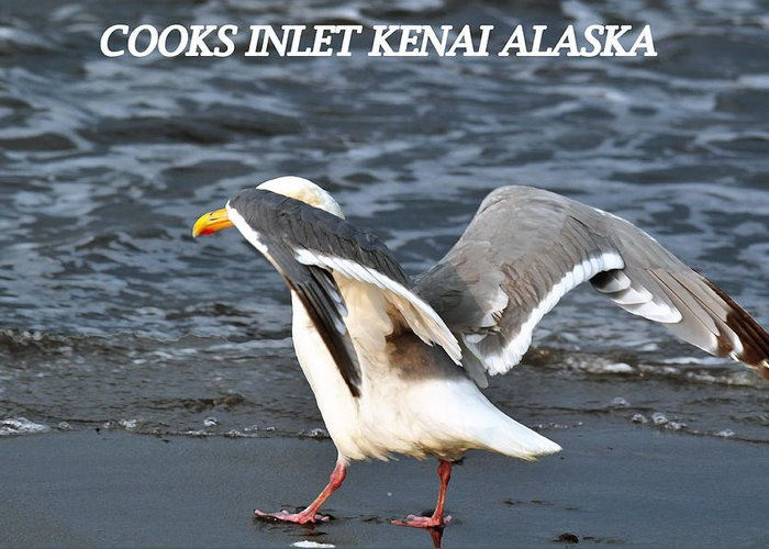 Seagulls Greeting Card featuring the photograph Segull by Debra Miller