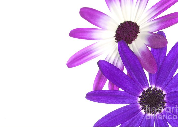Senetti Greeting Card featuring the photograph Senetti's by Richard Thomas