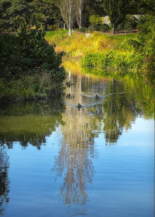 Park Greeting Card featuring the photograph Serene Reflection by Julie Palencia