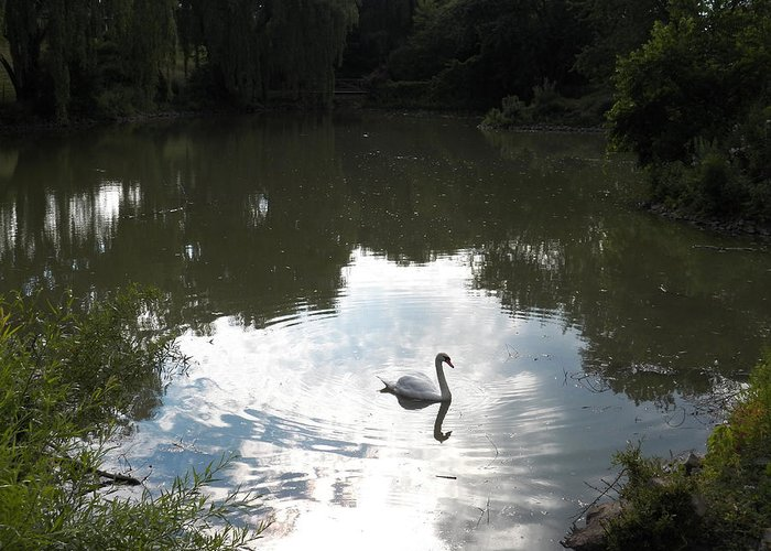 Swan Greeting Card featuring the photograph Serenity by Corinne Elizabeth Cowherd