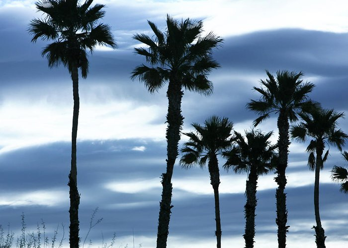 Landscape Greeting Card featuring the photograph Seven Palms by Gilbert Artiaga