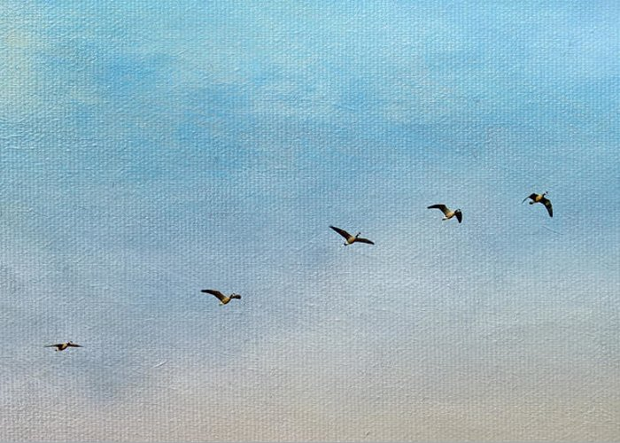 Geese Greeting Card featuring the photograph Seven by Rebecca Cozart