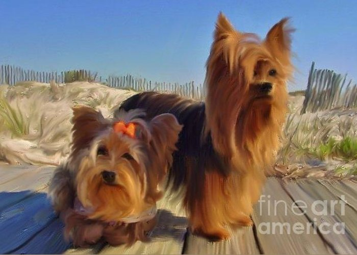 St. George Island Greeting Card featuring the photograph Sgi Yorkies by Wendy Ohlman