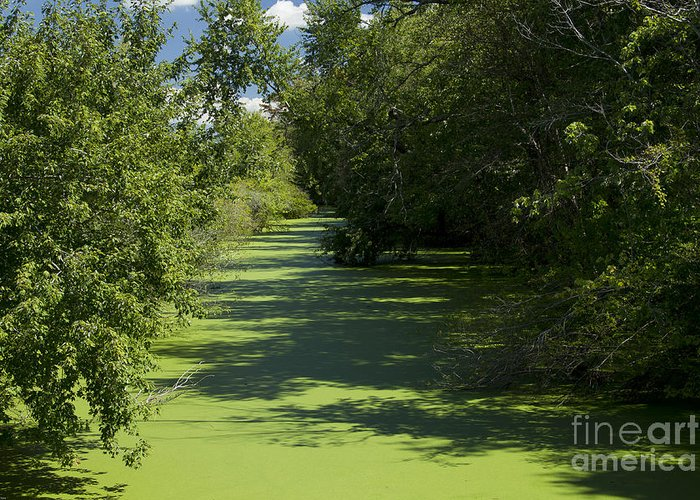 Creek Greeting Card featuring the photograph Shades Of Green by Kathy McClure