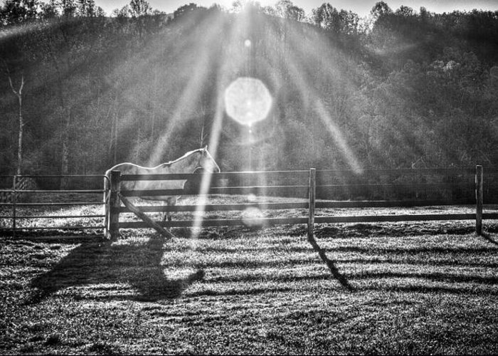 Barns Greeting Card featuring the photograph Shadow by Darrin Doss