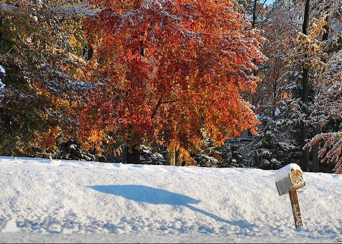 Autumn Greeting Card featuring the photograph Shadows In The Snow by Kimberly Little