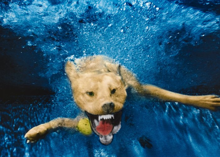 Dog Greeting Card featuring the photograph Shark Attack by Jill Reger