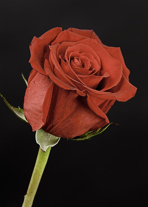 Rose Greeting Card featuring the photograph Sharp Red Rose On Black by M K Miller