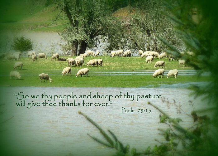Cindy Greeting Card featuring the photograph Sheep Grazing Scripture by Cindy Wright