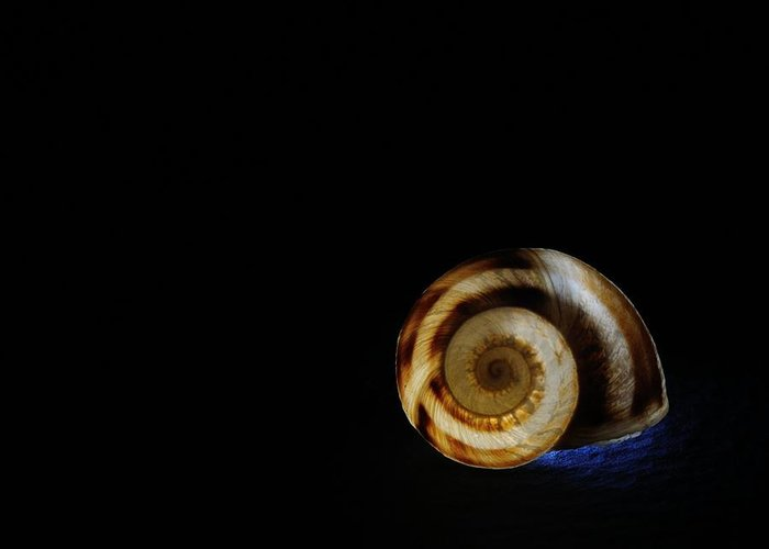 Shell Greeting Card featuring the photograph Shell 4 by Mark Fuller