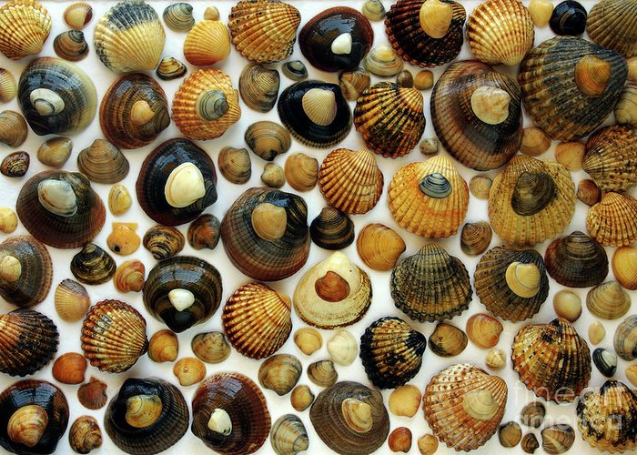 Aquatic Greeting Card featuring the photograph Shell Background by Carlos Caetano