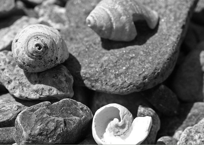 Shells Greeting Card featuring the photograph Shells I by David Rucker