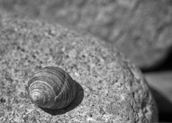 Shells Greeting Card featuring the photograph Shells IIi by David Rucker
