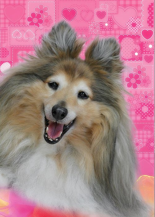 Shelties Greeting Card featuring the photograph Sheltie Smile by Christine Till