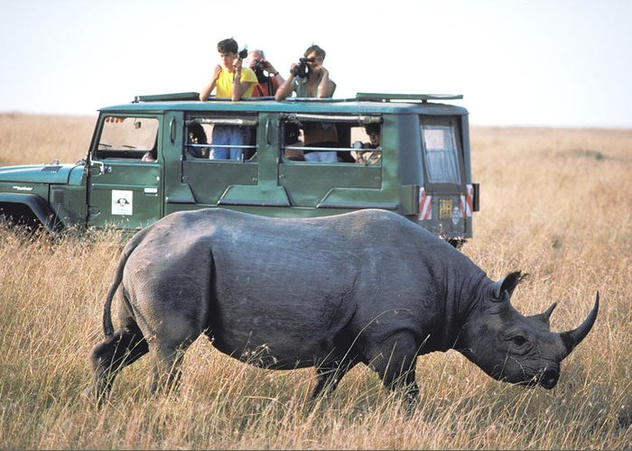 Rhinocerous Greeting Card featuring the photograph Shooting Rhinos by Carl Purcell