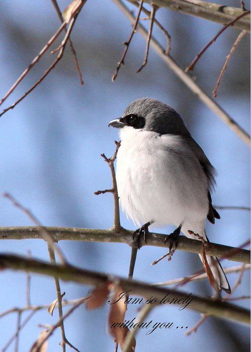 Shrike Greeting Card featuring the photograph Shrike - Lonely - Missing You by Travis Truelove