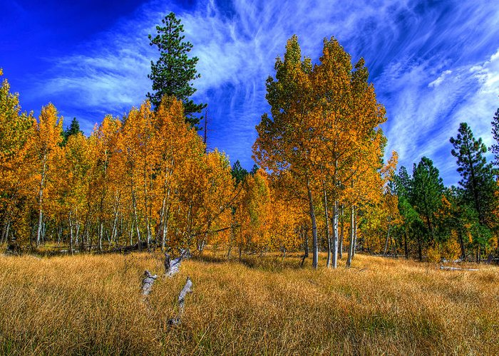 Aspen Trees Greeting Card featuring the photograph Sierra Nevada Fall Colors Lake Tahoe by Scott McGuire