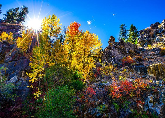Aspen Trees Greeting Card featuring the photograph Sierra Nevada Fall Colors Lassen County California by Scott McGuire