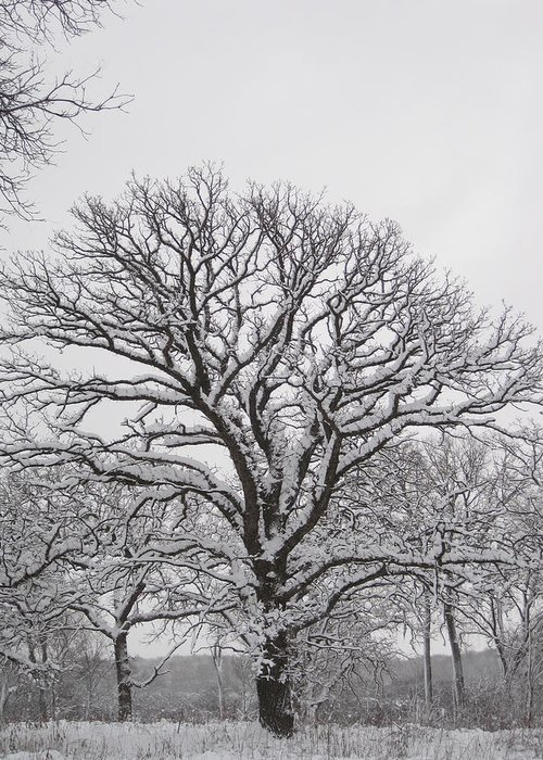 Snow Greeting Card featuring the photograph Silent Rest by Teresa Rogers