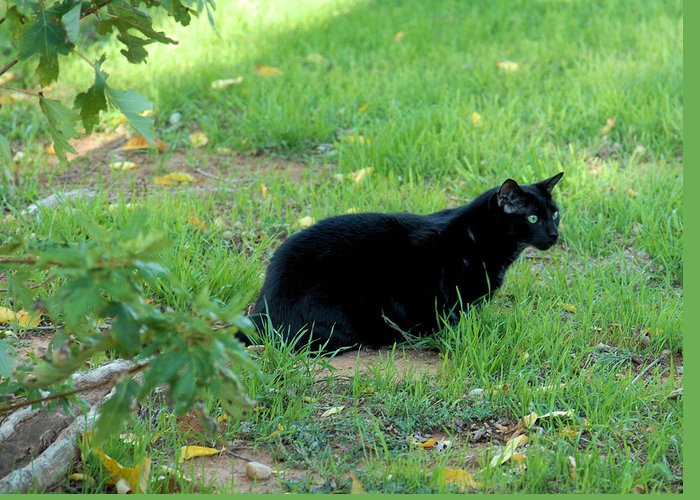 Cat Greeting Card featuring the photograph Silent Stalker by Cheryl Poland
