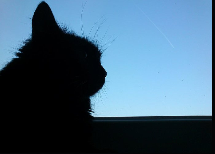 Cat Greeting Card featuring the photograph Silhouette by Lucy D