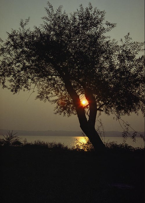Natural Forces And Phenomena Greeting Card featuring the photograph Silhouette Of Willow Tree At Sunset by Al Petteway