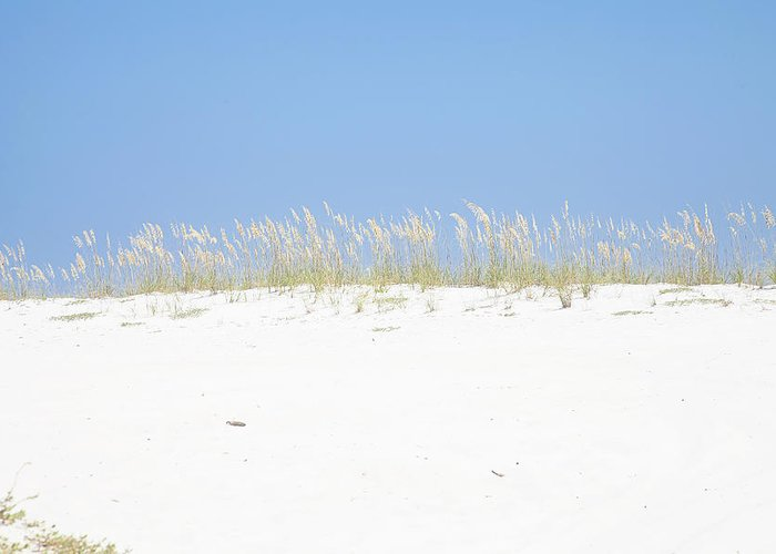 Sea Oats Greeting Card featuring the photograph Simplicity by Toni Hopper