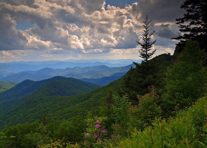 Blue Ridge Parkway Greeting Card featuring the photograph Single Tree by Steve Kraft