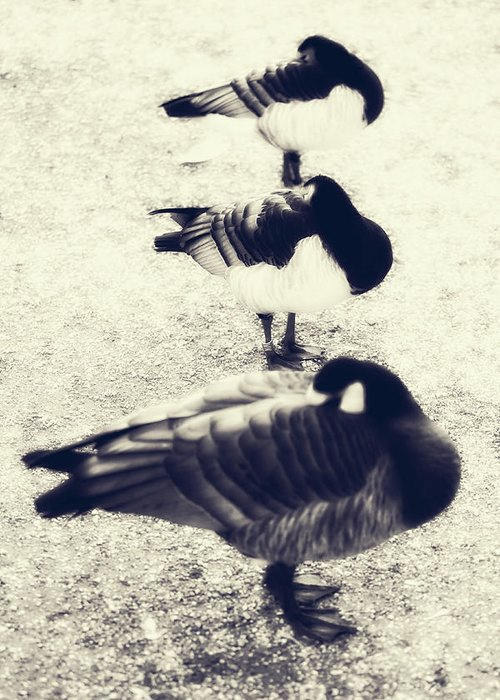 Ducks Greeting Card featuring the photograph Sleeping Ducks by Joana Kruse