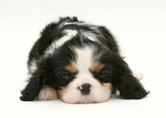 Animal Greeting Card featuring the photograph Sleeping Puppy by Jane Burton