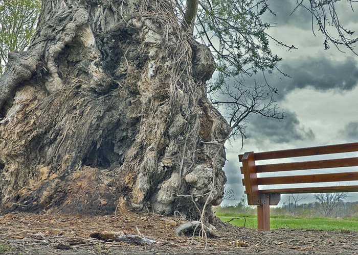 Bench And Tree Greeting Card featuring the photograph Sleepy Hallow Awakens by Jeramie Curtice
