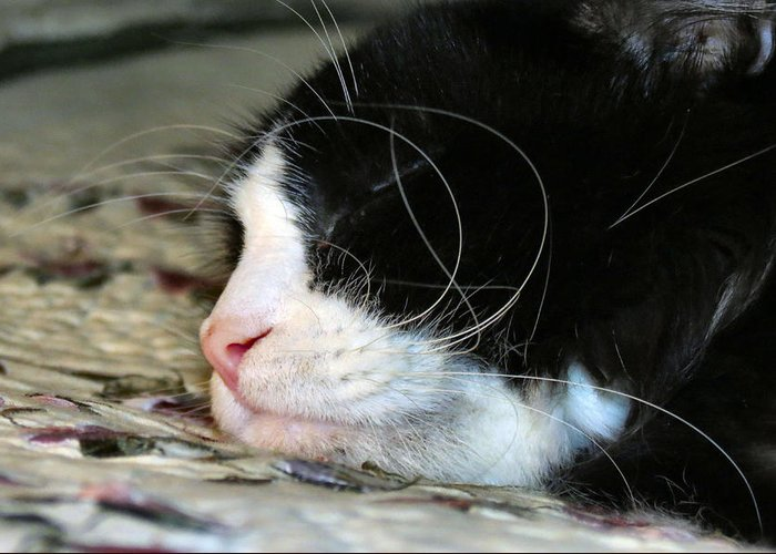 Cat Greeting Card featuring the photograph Sleepytime by Art Dingo