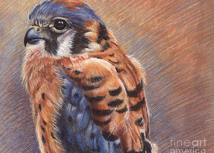 American Kestrel Greeting Card featuring the drawing Small Hunter by Darlene Watters