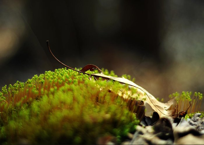 Moss Greeting Card featuring the photograph Small World by Rebecca Sherman